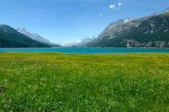 Spring at Lake Silvaplana (Bephep2010) Tags: 2017 77 alpen alpha engadin frühling graubünden grisons himmel lakesilvaplana landschaft sal1650f28 slta77v schweiz see silvaplana silvaplanersee sony switzerland wald wasser wiese alps blooming blühend forest lake landscape meadow sky spring water silvaplanasurlej ch