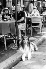 Lassie (Marcos Núñez Núñez) Tags: collie lassie parque cafeteria blackandwhite blancoynegro bw streetphotography urban streetphotographer mexico oaxaca fotografiacallejera monochromatic