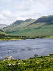 P1080769-2 (Quentin Lambert) Tags: irlande landscape green connemara atlantic fjord wild way