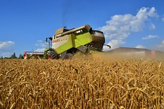 DSC_0199 (anetaležáková) Tags: summer sunset summerharvest sunnydays harvest agriculture agriphoto czechagri caseihpuma case casepuma165 caseoptum casepuma200 claas claaslexion newholland