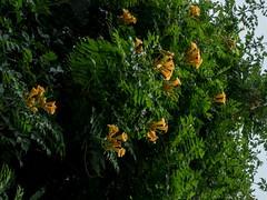 P7300866 (Copy) (pandjt) Tags: binghamtonny binghamton ny travelogue cutlerbotanicgarden garden scenicgarden cutlergarden botanicgarden