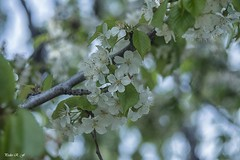 Puntitos sobre las flores (pedroramfra91) Tags: verano summer naturaleza nature exteriores outdoors flores flowers arboles trees bokeh