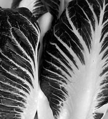 edible (blancopix) Tags: produce market lettuce endive vegetables