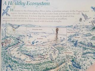 a healthy ecosystem