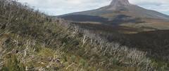 Cradle Mountain Lakes Circuit (20.5km) (trailhikingaust) Tags: hikes tasmania trails walks