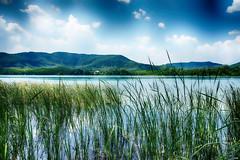 Llac de Banyoles (candi...) Tags: llacdebanyoles lago agua paisaje cielo nubes juncos montaña arboles naturaleza nature sonya77 airelibre