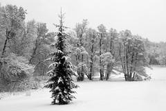 IMG_9664 (Lauro Meneghel) Tags: sweden svezia stockholm stoccolma winter inverno snow nature neve natura cold freezing freddo trees