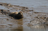 IMG_5864 cr (janharper) Tags: seals crouch roach estuaries leigh camera club