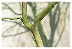 Tree and shadow (leo.roos) Tags: tree boom shadow schaduw a7rii cz sony242 amount sonycarlzeiss24mmf2zassmdistagon sal24f20z aprilfoolishness2018 dyxum challenge darosa leoroos distagon2420za distagont224