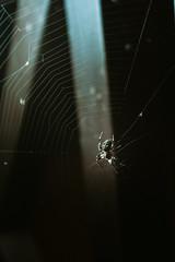 DSC01179 (Yaroshevsky) Tags: spider night nightlight art a7iii sonyalpha sony graph myart