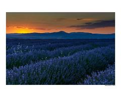 (david Ramalleira) Tags: davidramalleiraphotography davidramalleira nikon landscape landscapes nature naturaleza natureart naturephotography naturesfinest naturesart sunset atardecer