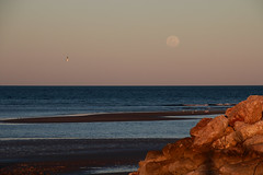 Moonrise, sunset (Paul Threlfall) Tags: moon luna birds beach exmouth westernaustralia northwestcape wa rocks exmouthgulf townbeach
