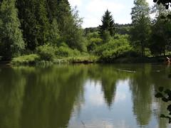 der Wulstteich (germancute) Tags: outdoor nature thuringia thüringen germany germancute deutschland landscape landschaft thüringerwald forest wald see teich pond cat