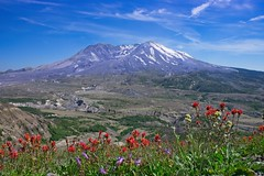 Mt St Helens Indian Paintbrush 9050 B (jim.choate59) Tags: jchoate on1pics mountain mtsthelens wildflowers indianpaintbrush volcano d610 landscape washingtonstate