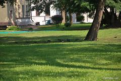 Національний заповідник Софія Київська, серпень 2018 InterNetri.Net Ukraine 425 (InterNetri) Tags: національнийзаповідниксофіякиївська україна ukraine internetri qntm