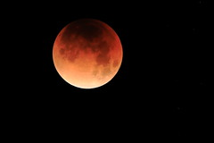 Lunar Eclipse January 2018 (steveboer.com) Tags: lunareclipse lunar eclipse 2018 moon january astronomy space dark night sky outerspace fullmoon universe planet sphere atmosphere black star astronomicalobject luna noperson outdoors phenomenon celestialevent computerwallpaper midnight darkness ballshaped solarsystem science cosmos crater nature hawaii