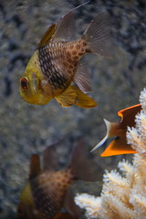DSC_0373 (stacheltierchen) Tags: fish fisch aquarium fishtank unterwasser nikon d3300 münchen flickr bunt water aqua animal pet hellabrunn tierpark tier tiere