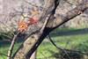 333/365 - Last leaves (Spannarama) Tags: 365 november tree leaves autumnleaves grass garden outofmywindow japanesemaple branches meyeroptikdomiplan50mm