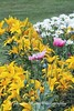 Benton Daylilly Farm (11) (Framemaker 2014) Tags: benton daylily farm garden flowers columbia county pennsylvania endless mountains united states america