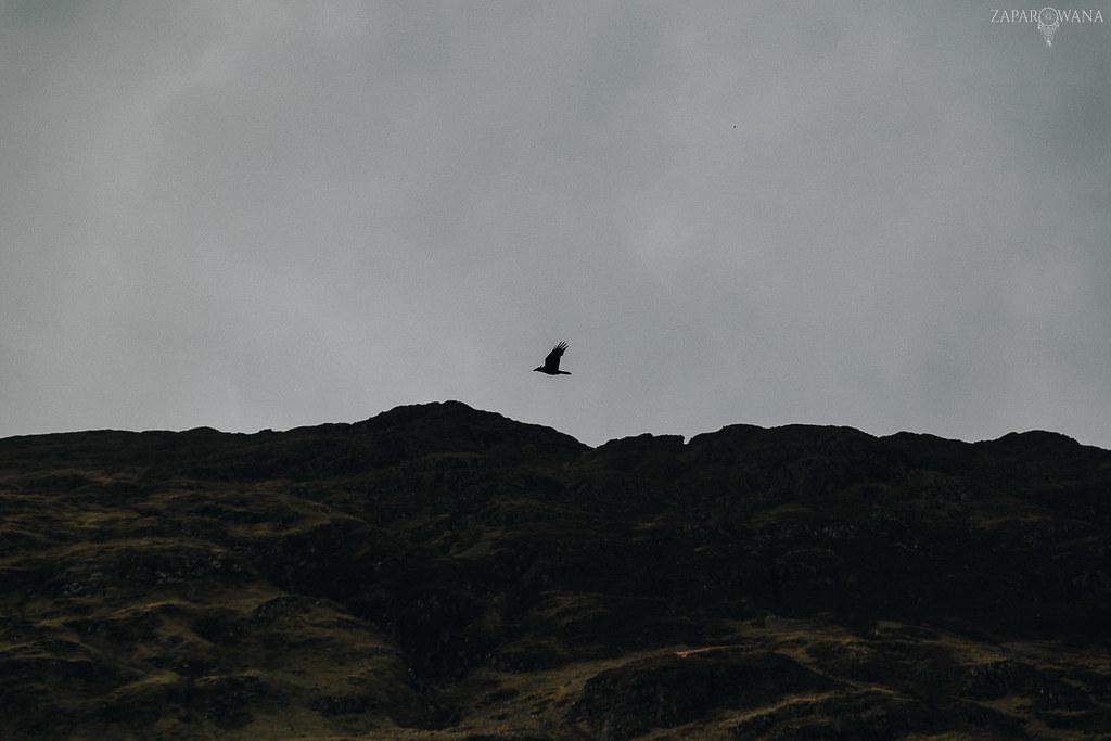 379 - Szkocja - ZAPAROWANA_