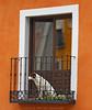 Pasa la vida (Lucía Morales Guinaldo) Tags: perro dog window ventana