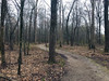 """north wolf river trail (""""One who sits by the fire"""") Tags: trail trailthroughtheforest trees forest foresttrail hikingthroughtheforest hiking earlyspring"""