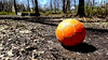 Cardiff Woods Park (dankeck) Tags: orange red discarded lost soccer ball upperarlington ohio franklincounty central park stone bench old