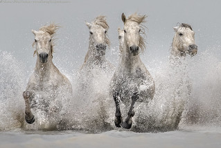 Emotions in Camargue