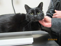 Timmie #2 - 7 year old neutered male