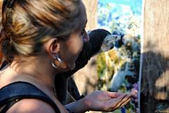 Pairi Daiza 3_2018_07_14_(62) (Juergen__S) Tags: belgium belgien belgique brugelette pairidaiza park panda pelican animals jousting feeding lemur african dance dancers tiger portrait