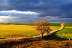 Exilio interior (una cierta mirada) Tags: path tree landscape outdoors road land earth cloudscape clouds yellow green blue naturephotography