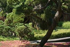 DSC08132- Beautiful Tree (oliveplum) Tags: gardensbythebay tree sunlight leica60f28macro sony singapore marinabay