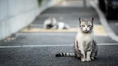 My Street (voxpepoli) Tags: cat tomcat straycat catlife street streets catoftheday lovecat animal animals whiskers ilovemycat meaow katze cats streetlife