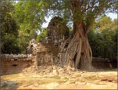 Angkor, Ta Som Temple 20180203_110227 DSCN2646 (CanadaGood) Tags: asia seasia asean cambodia siemreap angkor tasom temple tree sculpture people person wall building architecture archaeology canadagood 2018 thisdecade color colour buddhist khmer