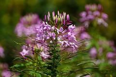 Flower (Jurek.P) Tags: flowers flower plants kwiat roślina ogródbotaniczny botanicgarden jurekp sonya77