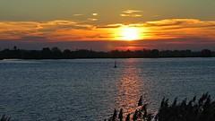Elbe (ruedigerhey) Tags: elbe fluss wasser himmel sonne schilf sonnenuntergang landschaft boje bäume river water sky sun reed sunset landscape buoy trees hamburg canon powershot a95