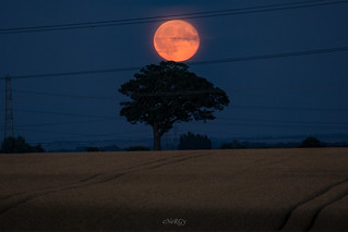 Red Moon Rise