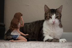 A-Z Doll Photo Challenge: P - pets (sadeyeddoll) Tags: barbie sweettea barbielook madetomove doll cat feline indoors cute scale candid
