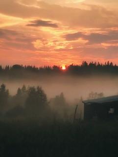 ~ foggy sunset ~ Riddarhyttan Sweden iPhone 7