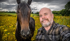 Sacriston walkabout. . . (CWhatPhotos) Tags: cwhatphotos photographs photograph pics pictures pic picture image images foto fotos photography that have which with contain mk digital camera lens micro four thirds olympus panasonic lumix pen sacriston county durham countryside area around walkabout nature green yellow horse field selfie selfee portrait me pose beard goatee animal together two rag weed weeds ragweed ragweeds