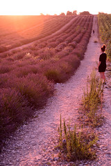 admiring lavander's field (moniq84) Tags: admiring lavander field fiels sunset violet colors nature naturephotography girl landscape provence valensole france ray light parfum 35mm plateau
