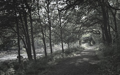 Avenue of Trees 2 (ShinyPhotoScotland) Tags: art photography equipment camera lens nature places scotland perthshire rawconversion manipulated composite hdr enfuse digikam composition rules flora toned colour trees rawtherapee serifaffinityphoto nearmidfardistance strathearn crieff monochrome blackandwhite birch ladymaryswalk fadeddesaturated cold greenish beech fuji fujixt20 fuji18135mm landscape walk evening light shadows river serene soft