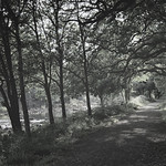 Avenue of Trees 2 thumbnail
