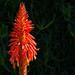 Flowers & Plants (Seil-bitz) Tags: santacaraina florianópolis praiadaarmação