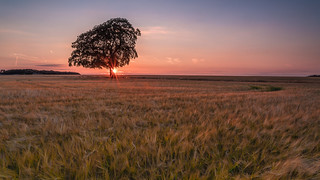 Lone Tree Sunset 2  (Explored 20-07-2018)