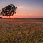 Lone Tree Sunset 2 thumbnail