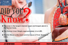 Facts About the Liver in Your Body (transplantliverindia12) Tags: health liver