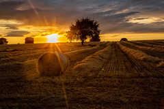 Summer evenings (microwyred) Tags: wheat spennells nonurbanscene landscape sunset hay nature crop places goldcolored bale agriculture summer landscaped harvesting ruralscene outdoors landscapes farm scenics yellow sky field
