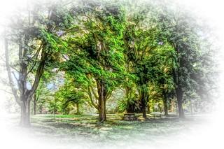 Atkinson's Trees