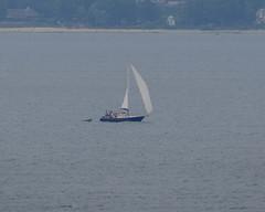 Finnish yacht Mariia in Öresund (frankmh) Tags: yacht boat motorsailer mariia öresund